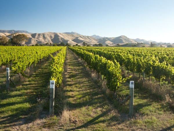 best wine list hong kong Sauvignon Blanc Sileni