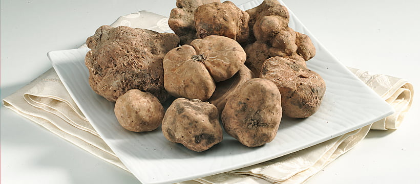 Alba white truffle everything you need to know
